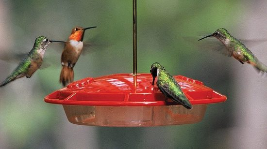 Aspects-hummingbird-feeders