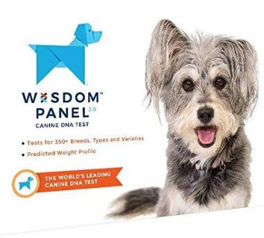 Wisdom Panel Dog DNA Tests